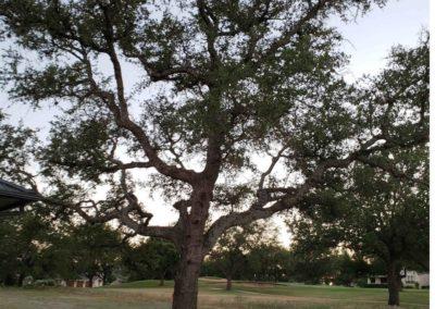 025_Tree